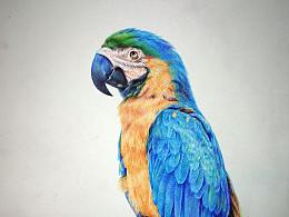 圆珠笔画鹦鹉