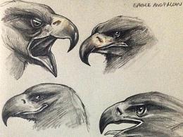 sketch- eagle