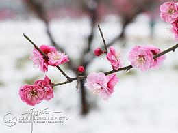 摄影 | 终觉春已至,又见长安雪!