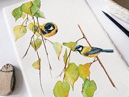 水彩插画|鸟儿与植物