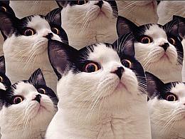 麦粒酥微信表情真猫版上架啦!!