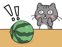 """""""当猫遇到兔子、喵星人代言风油精、挑西瓜高手是只猫....""""都是些什么鬼...."""