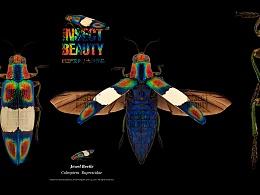 吉丁虫|印尼