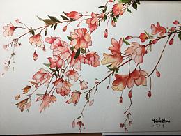 花卉—小花水彩训练营第二次作业