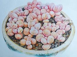 momo的彩铅世界-手绘多肉植物