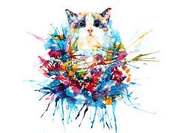 布偶猫。。。完全没抵抗力