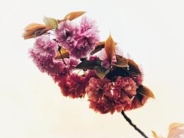 花开「三」