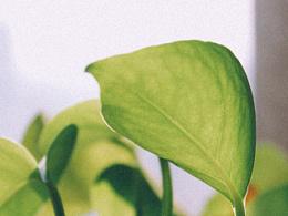 植物随拍一张