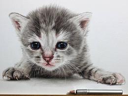 手绘-彩铅-小奶猫