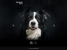 宠物网站—《馨乐派》狗狗俱乐部