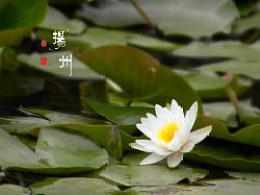 扬州游记——桂花飘香,游园惊梦。