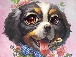 【萌宠by雪娃娃】比利牛斯犬