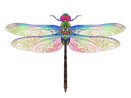 蜻蜓与甲虫