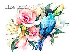 【水彩】青鸟·初春