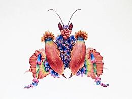 昆虫记—魔花螳螂 I-II