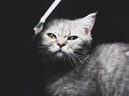 养猫是一种生活方式