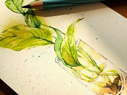 水彩花卉练笔--绿萝