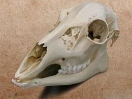 骨头ICON(附PNG下载)