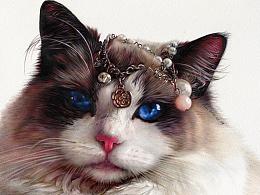彩铅作品-《雍容华贵的布偶猫》-祥雷XL