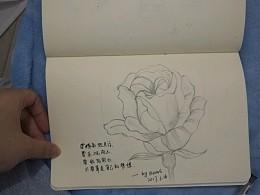 线稿  玫瑰
