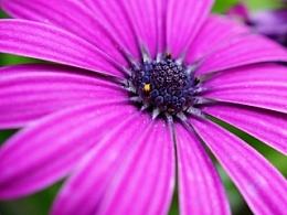 一组微距路边野花