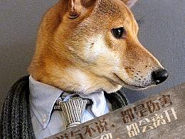 日本柴犬穿衣秀,带你《身入身心》,品人生哲学