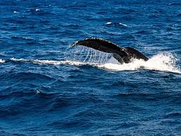 Go Go Okinawa——观鲸 离岛