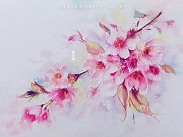 小花的水彩~情画入耳柔.浪漫樱花恋~