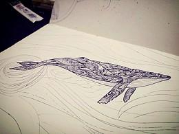 25Hz的鲸鱼