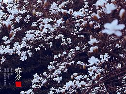 二十四气节之 春分