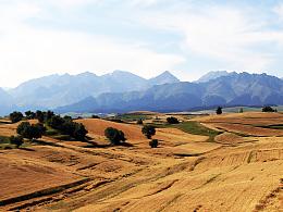 新疆奇台江不拉克万亩麦田