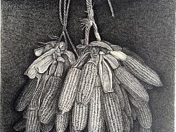 《老玉米》