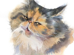 #存图# 没完成的100只猫