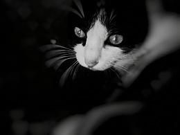 手机摄影—《黑白》