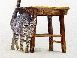 《蹭蹭猫》原创水彩教程