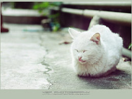 【YBP】随记の我爱猫猫