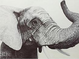 黑色圆珠笔——大象