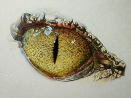 《原创彩铅——鳄鱼的眼睛》---窗
