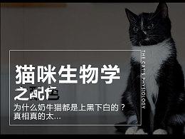 猫咪生物学之配色  为什么奶牛猫都是上黑下白的?真相真的太...