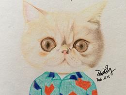 猫咪酷酷时装绘。