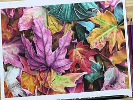 手绘-彩铅-落叶