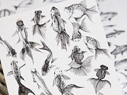针管笔手绘插画|小鱼儿