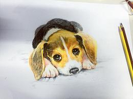 萌狗狗∪・ω・∪彩绘