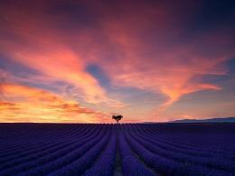 紫色花海,儿时的梦