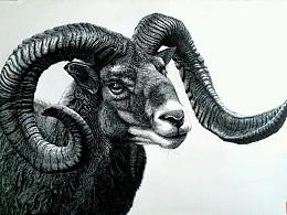 初秋钢笔画之《欧洲盘羊》