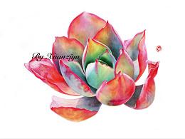 多肉-白玫瑰