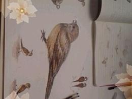 画的一组鸟类的彩铅,准备教学生