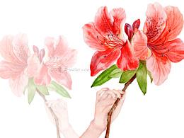 杜鹃/花卉
