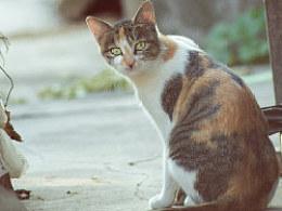 邻村阿婆那里三只猫