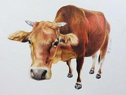 彩铅练习-《老牛》